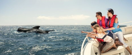 Whale watching in La Palma