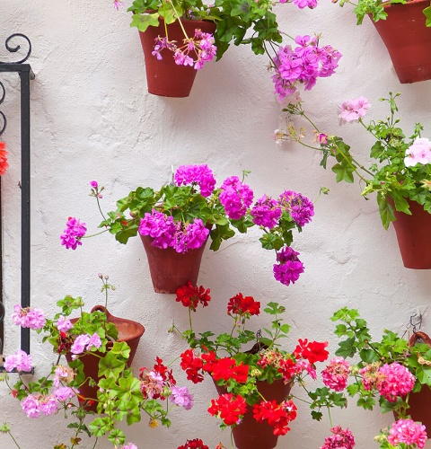 Flowers in Cordoba