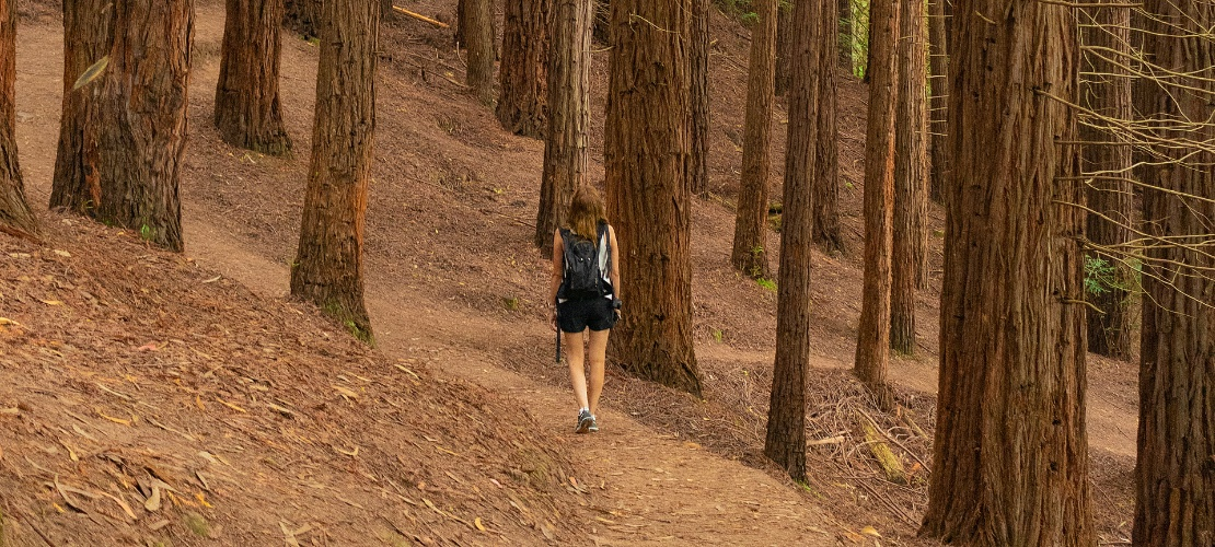 Woman walking in the sequoia forest of Monte Cabezón, Cantabria