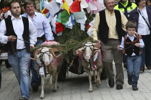 A cart pulled by two rams carrying an offering from parishioners at the fiesta of Las Mondas in Talavera de la Reina (Toledo, Castilla-La Mancha)