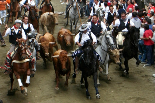 Bull and horse droving in Segorbe