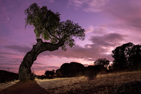 Oak tree in Cornalvo Natural Park, Extremadura