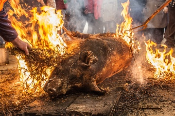 Traditional pig slaughter at the Feira do Cocido in Lalín (Pontevedra, Galicia)