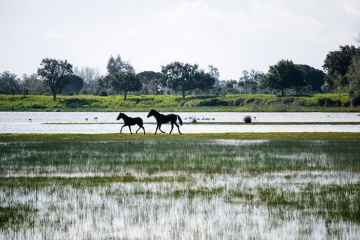 Horses at the edge of the wetlands