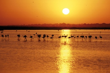 Sunset over the wetlands with flamingos in silhouette
