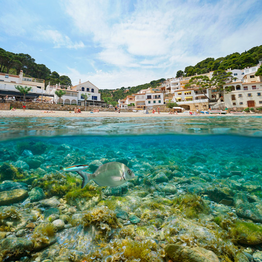 Views from the water of the great diversity of species to be seen snorkelling in Cala Sa Tuna, Begur, Girona