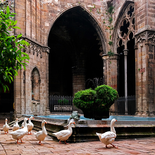 Geese in the cloister of Barcelona Cathedral: