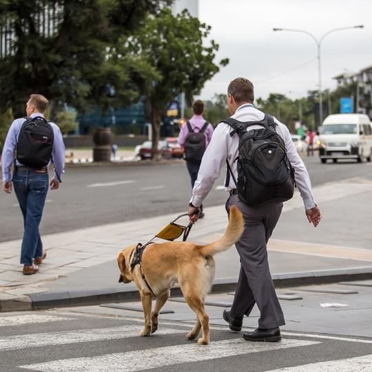 A blind person with a guide dog crossing the road