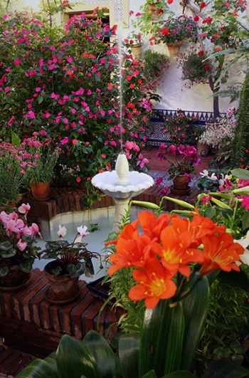 Festival of the Courtyards in Cordoba