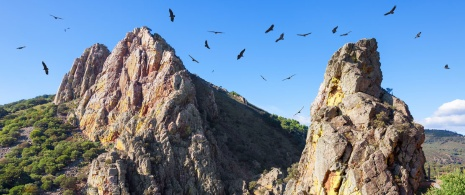 Birds flying over Monfragüe National Park