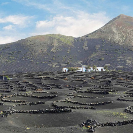 Vineyards emerging from craters in La Geria, Lanzarote