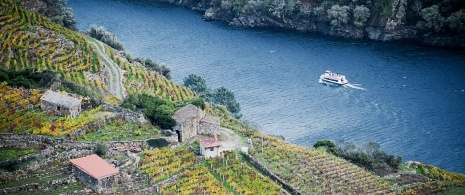 Catamaran tour of the Ribeira Sacra